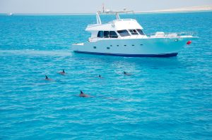 caribbean yacht charter with dolphins